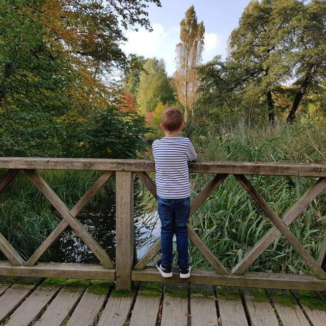 Goldener Herbst  Leider viel zu selten dieser Herbst warhellip